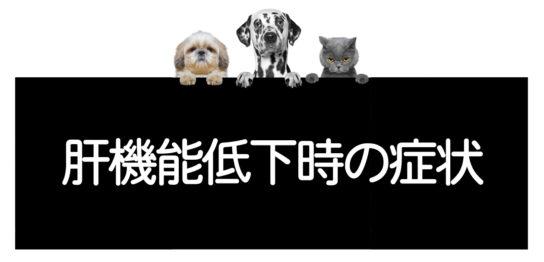 犬猫の肝機能低下時の症状