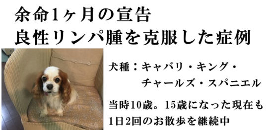 kobayashiarieru2