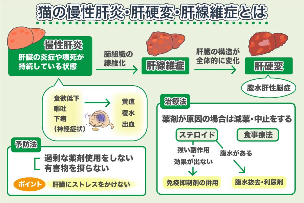 慢性肝炎・肝硬変・肝線維症