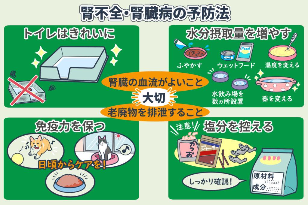 腎不全・腎臓病の予防方法