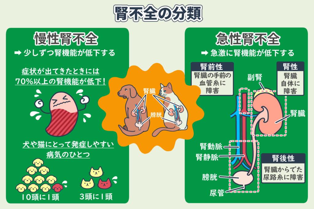 腎不全の分類