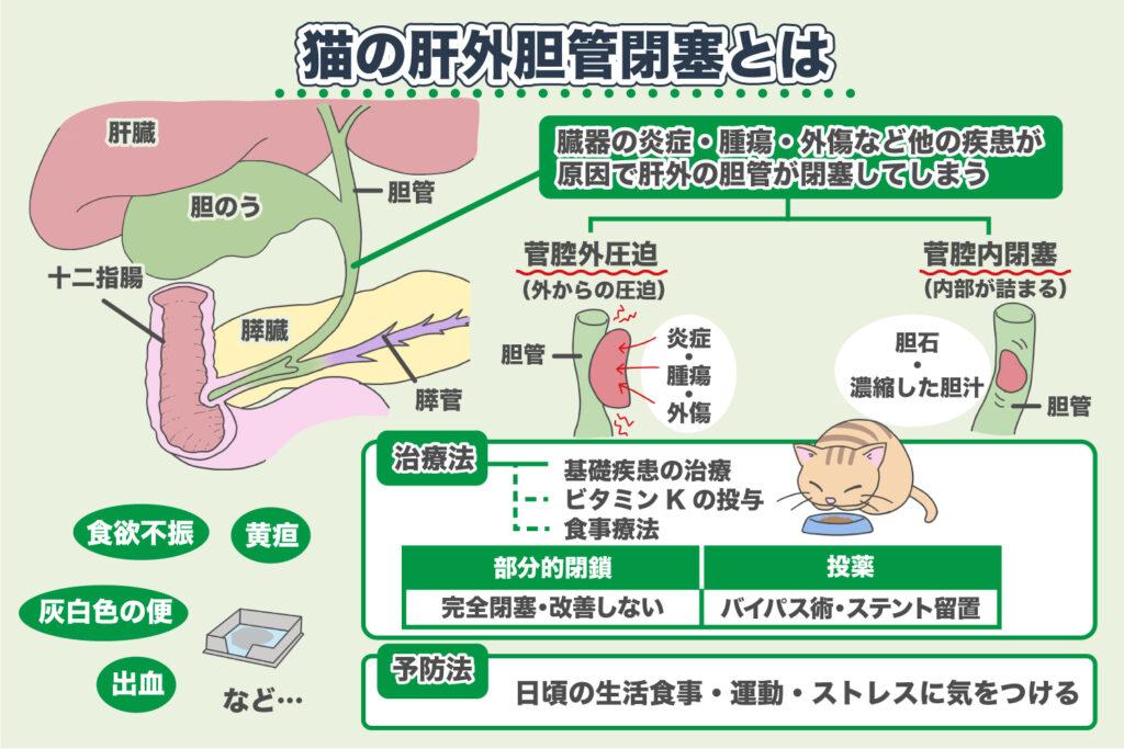 肝外胆管閉塞