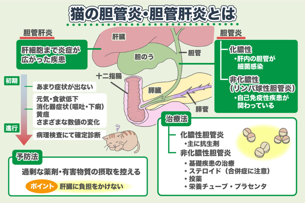 胆管炎、胆管肝炎