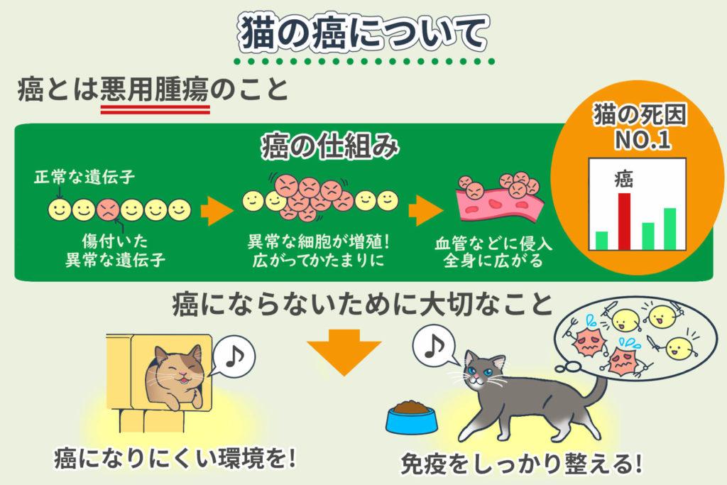 猫の癌について