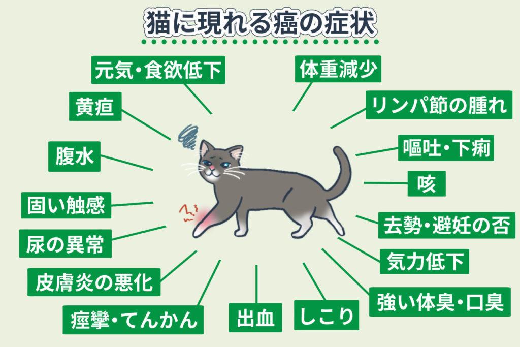 猫に現れる癌の症状