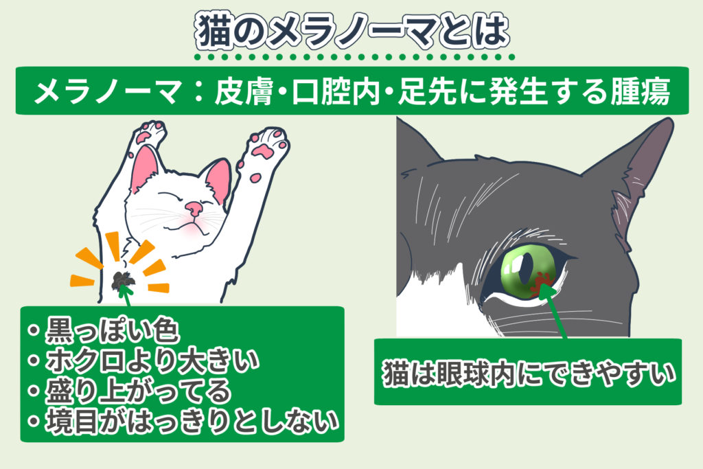 猫のメラノーマとは