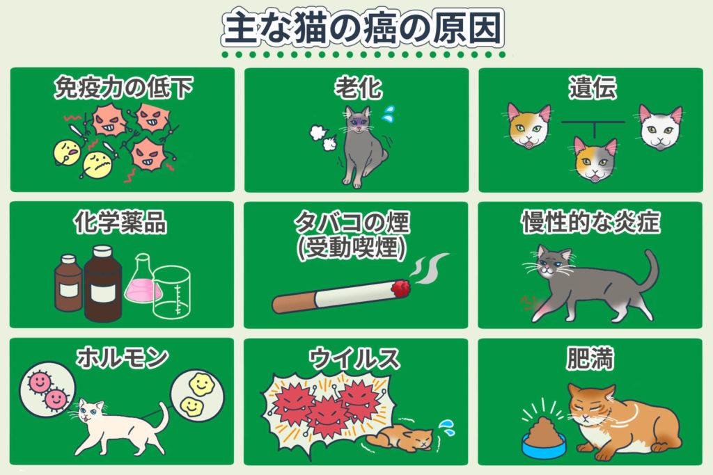 主な猫の癌の原因