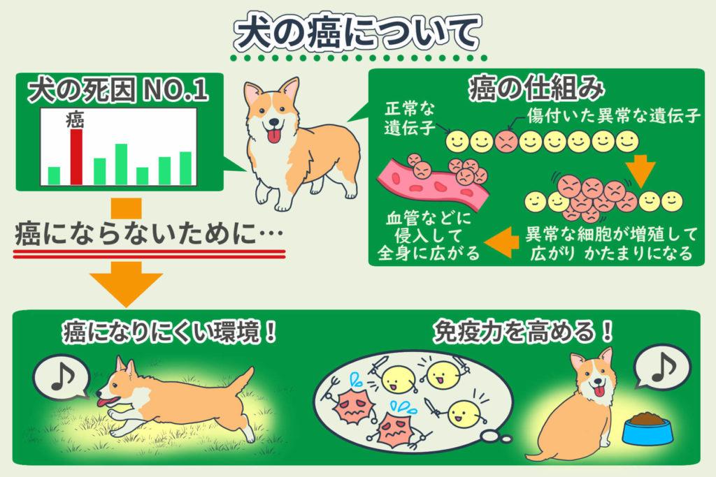 犬の癌について