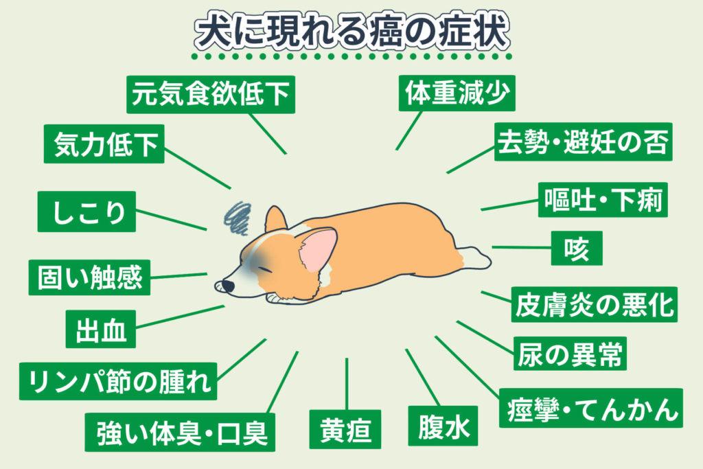 犬に現れる癌の症状