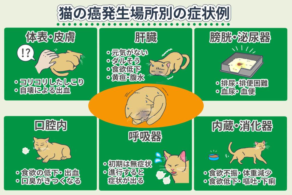 猫の癌発生場所別の症状例