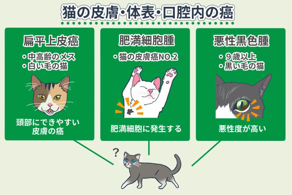 猫の皮膚・体表・口腔内の癌