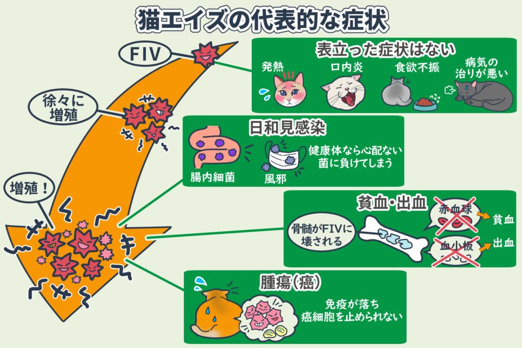 猫エイズの代表的な症状