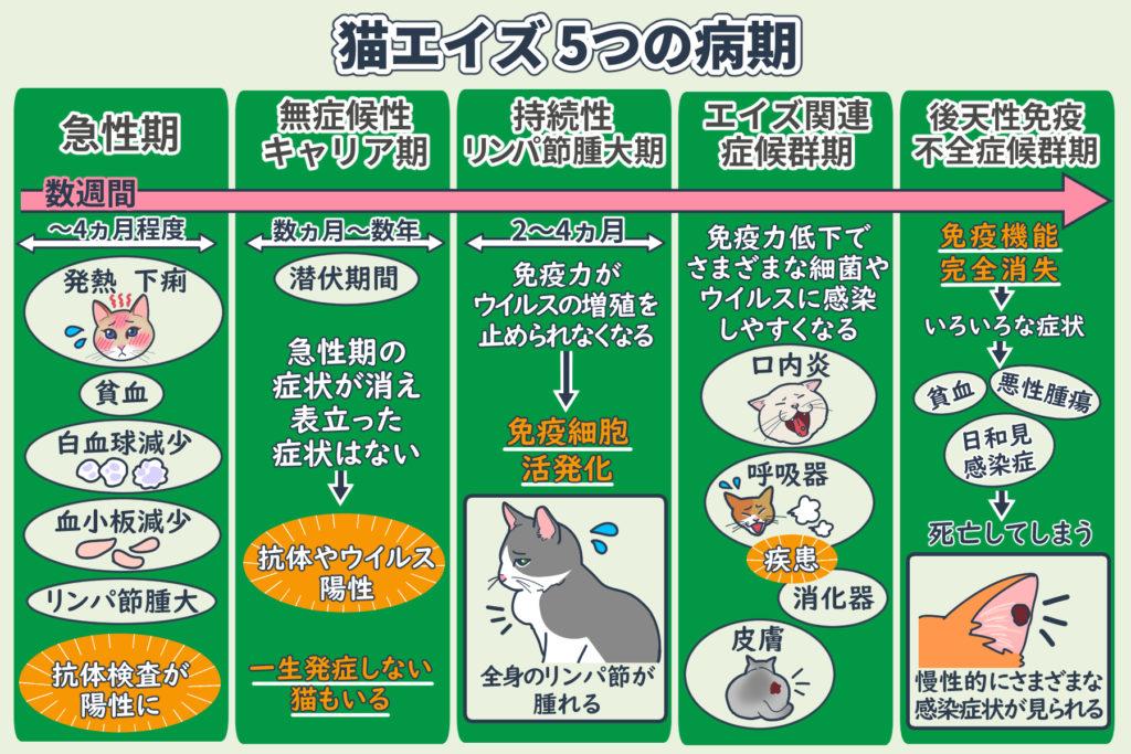 猫エイズ5つの病期