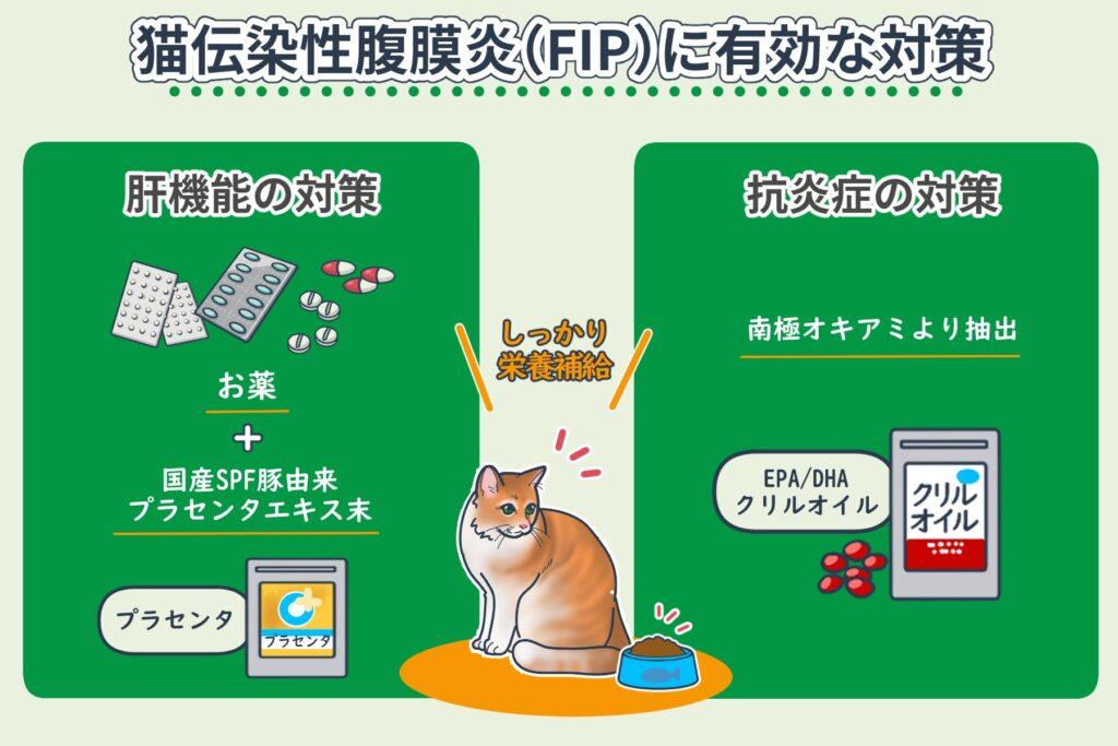猫のFIP対策