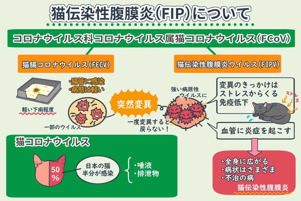 猫伝染性腹膜炎(FIP)とは?