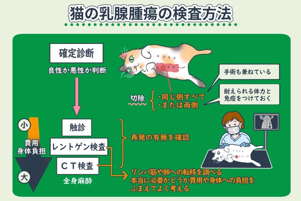 猫の乳腺腫瘍の検査について
