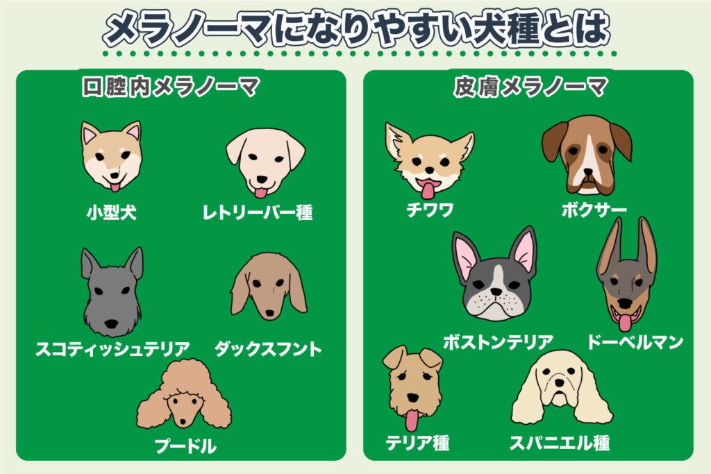 メラノーマの多い犬種は?