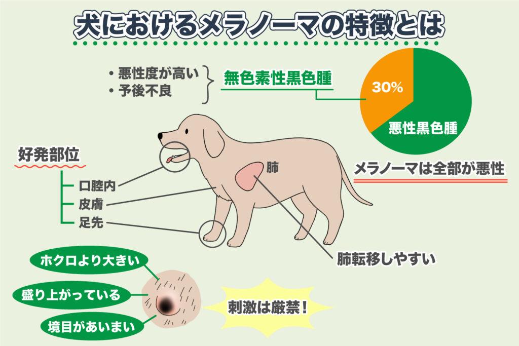 犬のメラノーマの特徴
